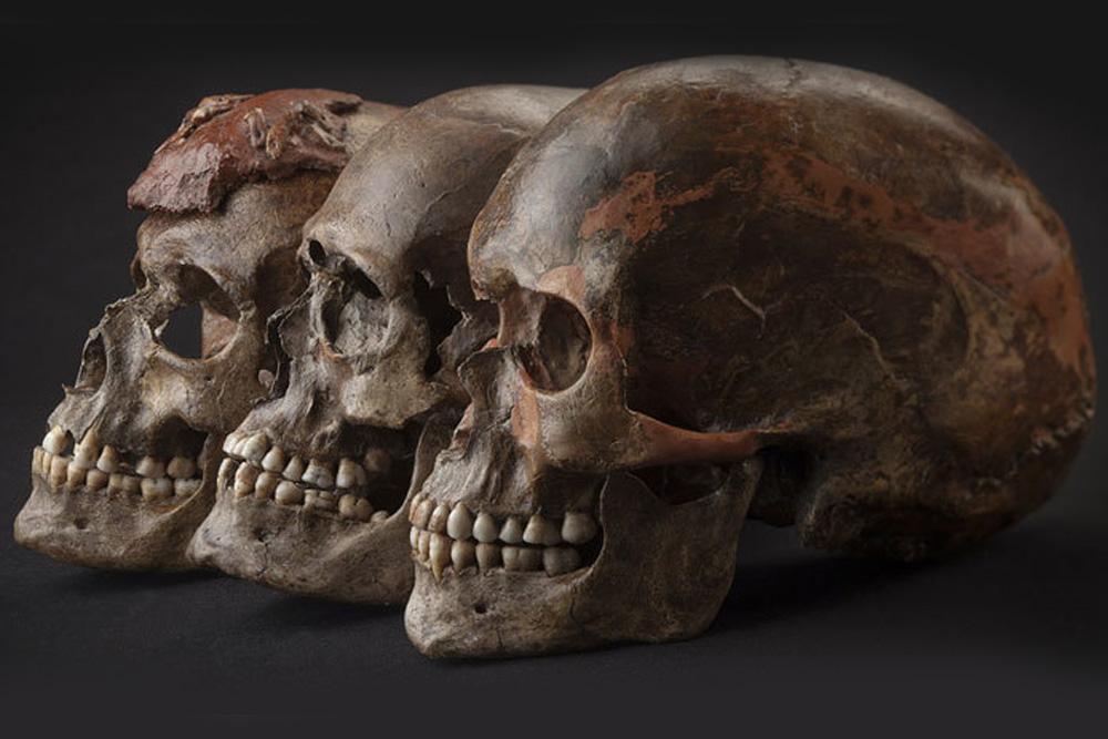 Drei ca. 31.000 Jahre alte Schädel aus Dolni Věstonice im heutigen Tschechien, die zur Bevölkerungsgruppe der Gravettien-Kultur gehören. Foto: MPI für evolutionäre Anthropologie, Martin Frouz and Jiří Svoboda