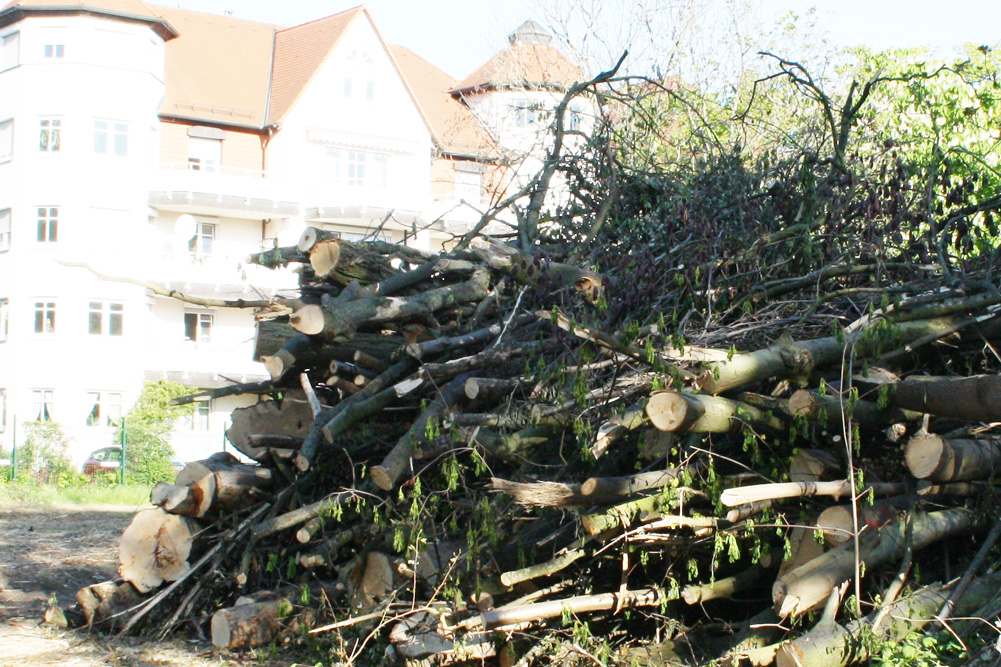 Selbst im Mai wird in Leipzig noch eifrig drauflos gesägt. Foto: Ralf Julke