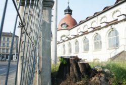 Baum ab am Felsenkeller. Foto: Ralf Julke