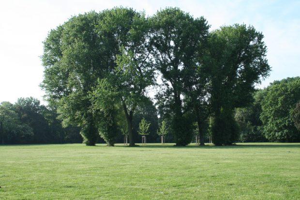 Die große Wiese im Mariannenpark. Foto: Ralf Julke