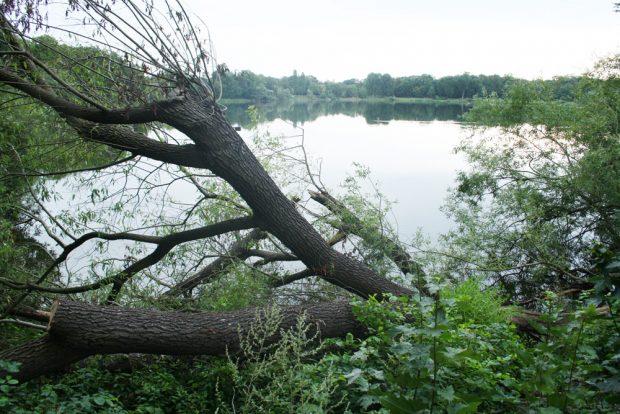 Baumbruch am Auensee. Foto: Ralf Julke