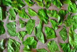 Marinierter Mangold für knusprige Chips. Foto: Maike Klose