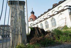 Dieser Baum an der Zufahrt Zschochersche Straße soll durch eine Neupflanzung ersetzt werden. Foto: Ralf Julke