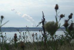 Blick über den Zwenkauer See zum Kraftwerk Lippendorf. Foto: Ralf Julke
