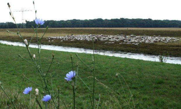 Schlafende Schafe an der Landesgrenze. Foto: Ralf Julke
