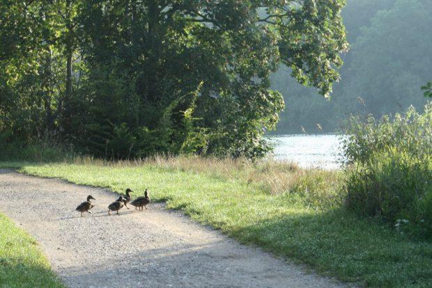 Verkehrserfahrene Enten am Bagger. Foto: Ralf Julke