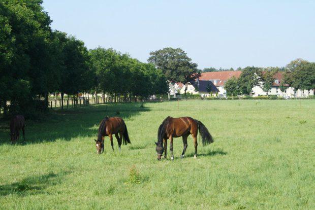 Pferdekoppel in Graßdorf. Foto: Ralf Julke