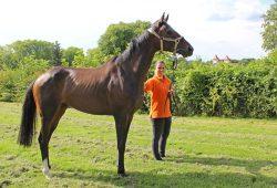 Der 4-jährige Wallach Mount Juliet ist das zweite Rennpferd des Rennstalls Scheibenholz und geht am 28. August zum Familienrenntag im Scheibenholz für die Leipziger Besitzergemeinschaft an den Start. Foto: Corinna Schulze