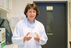 Untersucht Nervenzellen auf Biochips: Prof. Dr. Andrea Robitzki. Foto: Swen Reichhold/Universität Leipzig