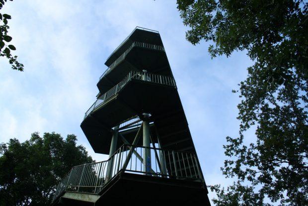 Der Rosentalturm auf dem Scherbelberg. Foto: Ralf Julke