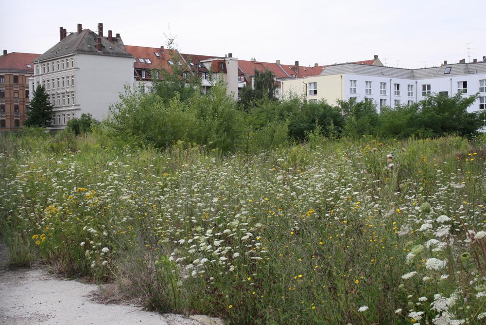 Die Brachfläche an der Schulze-Delitzsch-Straße. Foto: Ralf Julke