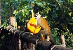 Halloweenwochenende im Zoo. Foto: Zoo Leipzig