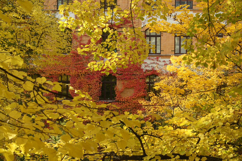 Schule im Herbst. Foto: Ralf Julke