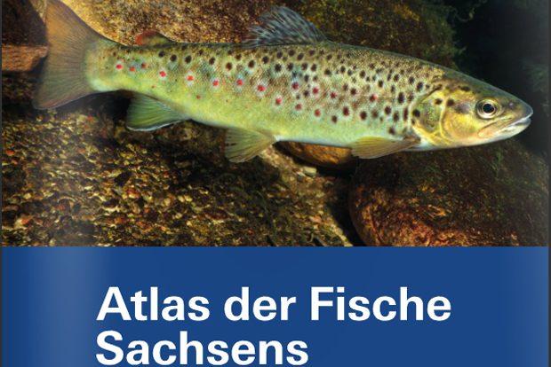 Atlas der Fische Sachsens. Foto: LfULG