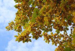 Bäume wachsen nicht in den Himmel ... Foto: Ralf Julke