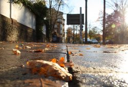 Fußweg im Herbst. Foto: Ralf Julke