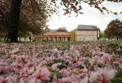 GRASSI Museumskomplex am Johannisplatz. Foto: Ralf Julke