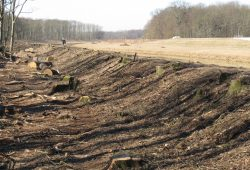 Abgeholzte Deiche in der Nordwestaue. Foto: Ökolöwe