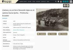 Aus der Sammlung von Hans Meyer: Bäuerinnen mit ihren Lamas auf dem Weg nach Quito. Foto: Paul Grosser, Copyright: Leibniz Institut für Länderkunde