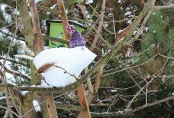 NABU Sachsen lädt zur Wintervogelzählung und zum Schneevogel bauen ein. Foto: Philipp Ebert