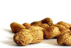 Ein paar Peanuts fürs Volk. Foto: Ralf Julke