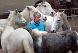 Rassepräsentationen, Reitvorführungen und Präsentationen rund um Gesundheit und Ausbildung von Pferd und Reiter. Foto: Leipziger Messe / Tom Schulze