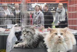 Tierisches Vergnügen: Nicht nur die Besucher der HAUS-GARTEN-FREIZEIT genießen einen entspannten Messetag. Foto: Leipziger Messe/Lutz Zimmermann