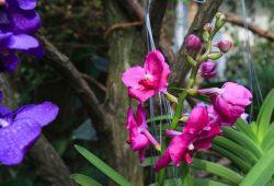 Tropischer Blütenzauber im Reich der Orchideen. Foto: Swen Reichhold/Universität Leipzig