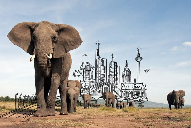 Wo der Klimawandel den Lebensraum der Tiere vernichtet, sind die Arten selbst gefährdet. © Anup Shah/WWF