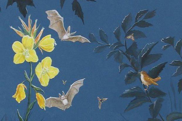 Nachtmusikanten – Fledermäuse, Nachtigall und Insekten. Zeichnung: Annett Kitsche