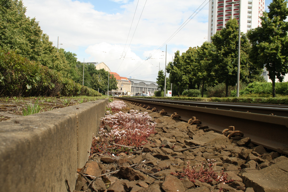 Straßenbahngleise- mal ohne Straßenbahn. Foto: Ralf Julke