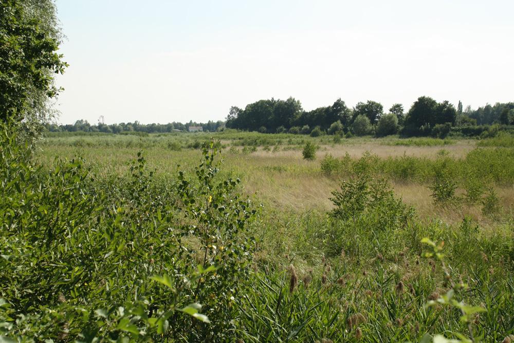 Wiesenlandschaft im einstigen Stausee. Foto: Ralf Julke