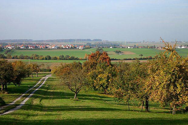 Streuobstwiese im Herbst. Foto: Michaela Steininger