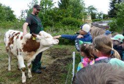 Mit dem Ökolöwen können Kinder BioBauern über die Schulter schauen. Foto: Ökolöwe