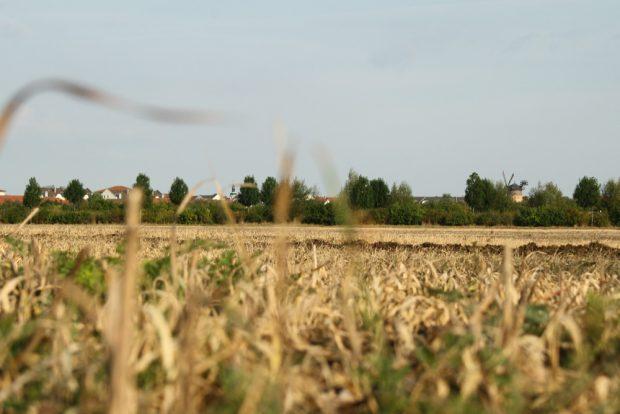 Feld bei Lindenthal. Foto: Ralf Julke