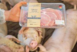Bezieht Lidl Fleisch aus Ställen, in denen die Tiere keinen Auslauf, kaum Tageslicht und Gen-Futter im Trog haben? Foto: Fred Dott