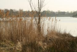 Blick über das Naturbad Südwest. Foto: Ralf Julke