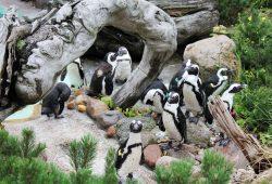 Am Kindertag beim Pinguinfüttern helfen. Foto: Zoo Leipzig