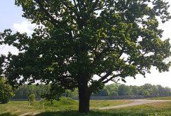 Bäume und Lebensräume im Auwald schützen. Foto: NuKLA