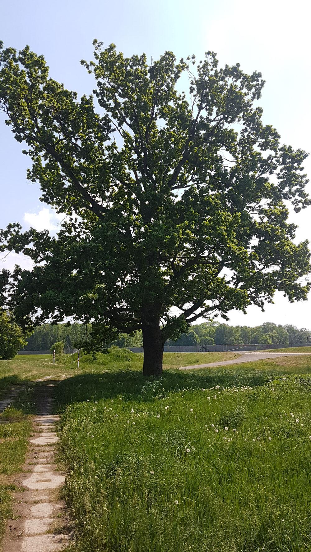 NUKLA-Grundstück in der Elsteraue. Foto: NuKLA