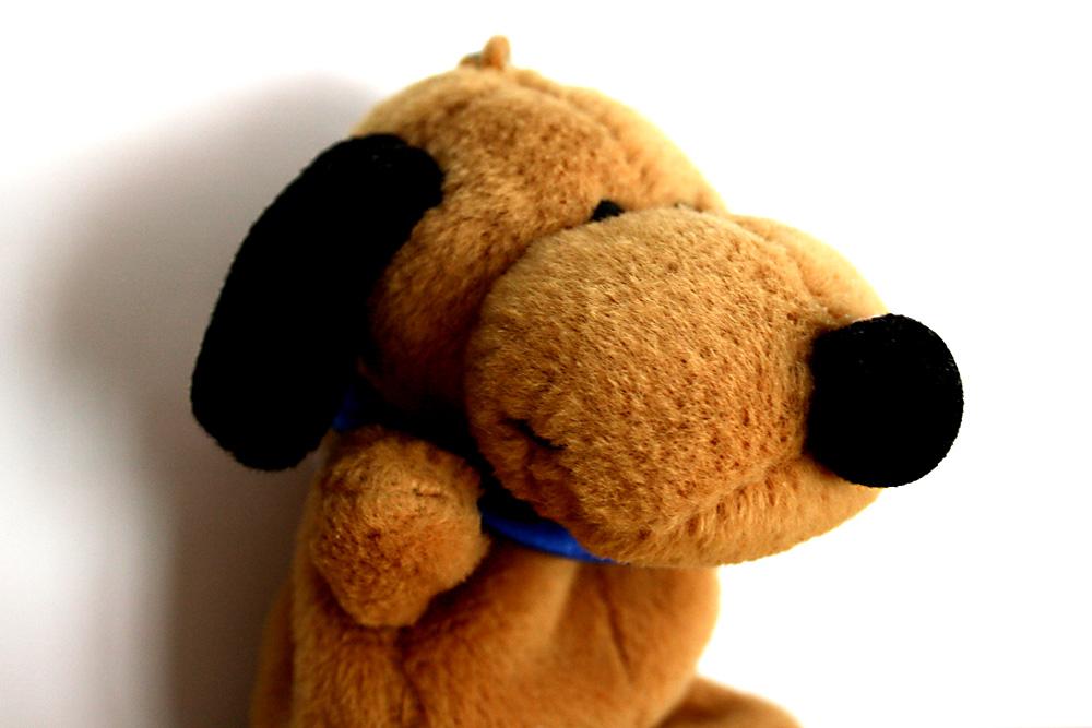 Gehört nicht auch ein Hund zwingend zur Leitkultur? Foto: Ralf Julke