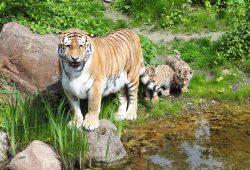 Bella mit Jungtieren auf der Außenanlage. Foto: Zoo Leipzig