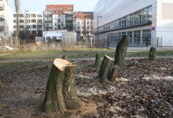Baumfällungen in Connewitz. Foto: Ralf Julke