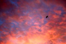 So lieben es die deutschen Mythenmaler: blutige Himmel ... Foto: Ralf Julke