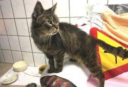 Eine der Katzen, die ein neues Zuhause sucht. Foto: Landratsamt Landkreis Leipzig