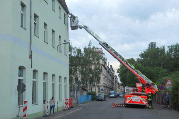 Mit Hilfe der Feuerwehr konnten die Vögel aus der tödlichen Falle befreit werden. Foto: NABU Leipzig
