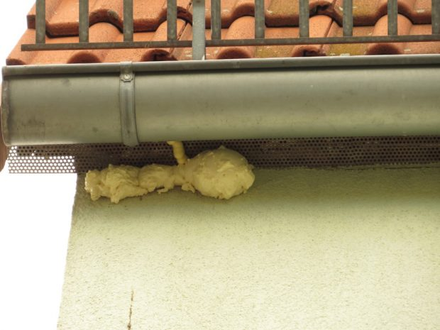 Mit Bauschaum versiegeltes Haussperlingsnest. Foto: NABU Leipzig