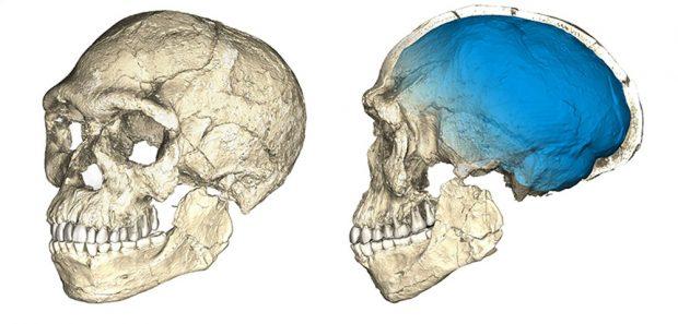 Die ersten unserer Art: Zwei Ansichten einer zusammengesetzten Rekonstruktion der frühesten bekannten Homo sapiens-Fossilien von Jebel Irhoud (Marokko) basierend auf modernster Computertomografie (micro-CT) mehrerer Originalfossilien. Foto: Philipp Gunz, MPI EVA Leipzig (License: CC-BY-SA 2.0)