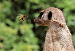 Bienen unterwegs im Zoo Leipzig. Foto: Zoo Leipzig