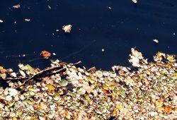 Alles fließt - und sammelt sich gern. Foto: L-IZ.de